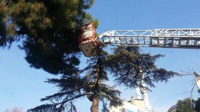 Bursa'da muhabbet kuşları için itfaiye seferber oldu