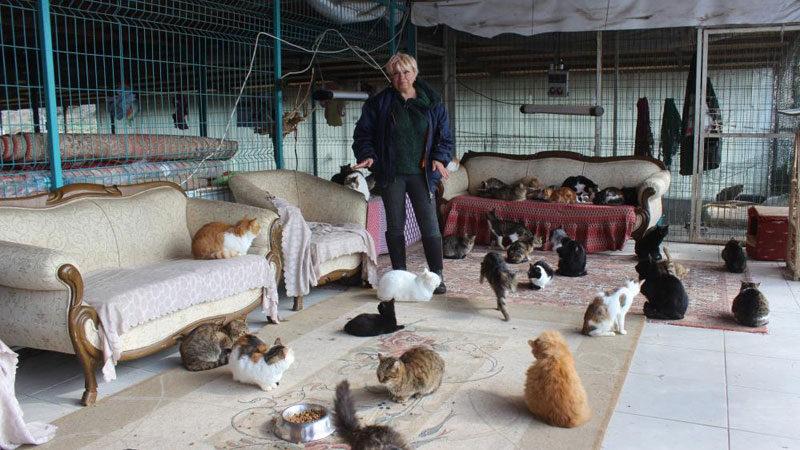 Bursa'da yok böyle bir ev! Tam 250 kedi yaşıyor