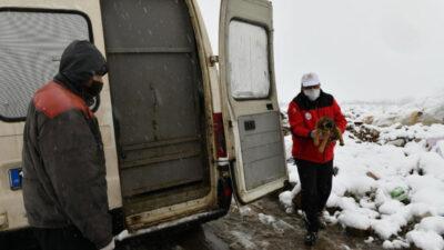 11 yavru köpek donmaktan son anda kurtarıldı