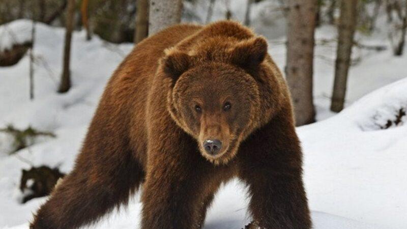 Şoke eden olay! Tuvaletteyken ayı saldırdı