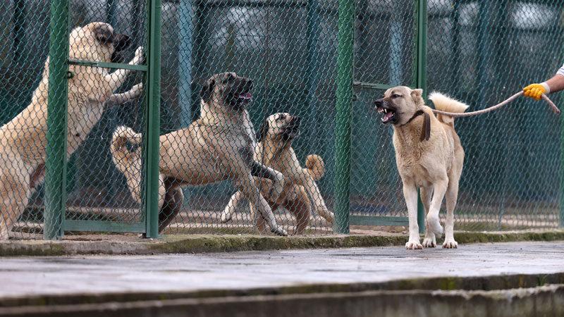 Bursa'da yetiştiriliyorlar! Aylar öncesinden sıraya giriyorlar