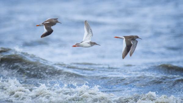 Bursa'da kar fırtınasında kalan kuş türleri fotoğraflandı
