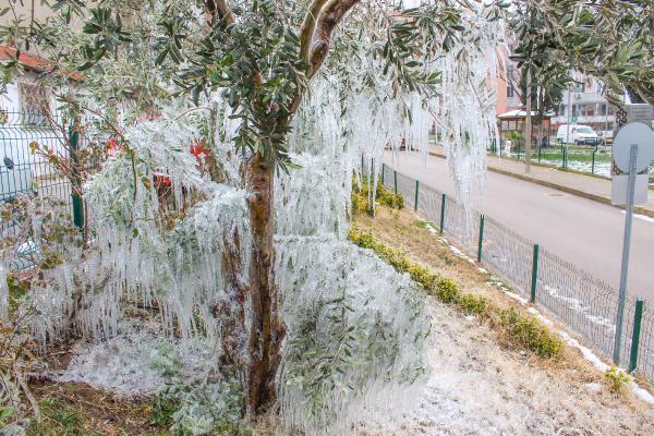 Bursa'da hortumdan fışkıran su, ağaçlarda sarkıt oluşturdu