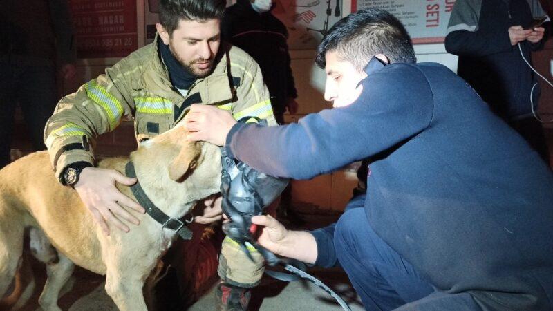 Bursa'da dumandan zehirlenen köpek, kalp masajıyla hayata döndürüldü