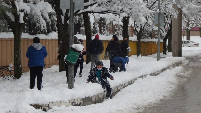 Bursa'da kar yağışına dayanamayan ağaçlar kırıldı