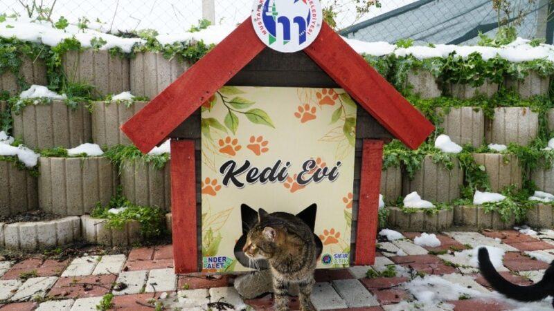 Mustafakemalpaşa kedi evleri ile donatıldı