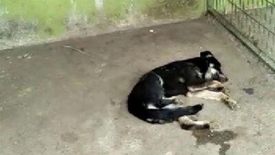Bursa'da hayvanseverleri ayağa kaldıran görüntü