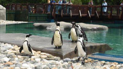 Hayvanat Bahçesi geçici olarak ziyarete kapandı