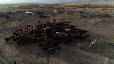 Fotoğraf tutkunlarının yeni gözdesi: Yılkı atlarıyla ünlü 'Hürmetçi Sazlığı'