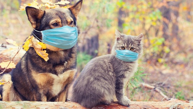 Hayvanlar için ilk Kovid-19 aşısı! Nisanda seri üretime başlanacak