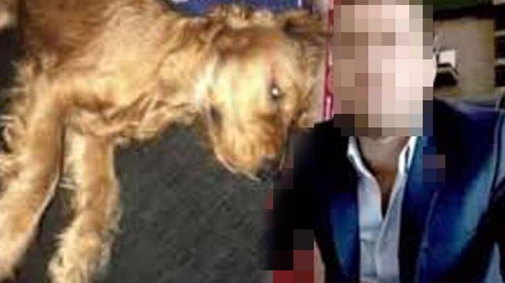 Emanet edilen köpeğe cinsel istismar iddiasında iddianame düzenlendi