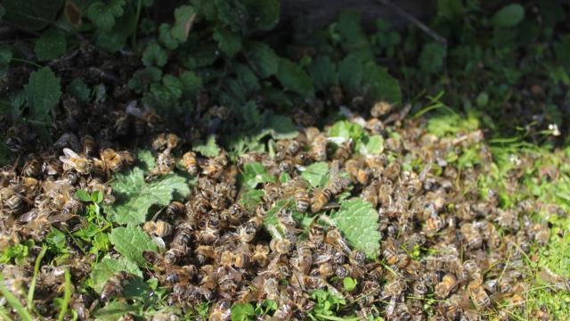 Binlerce arı telef oldu