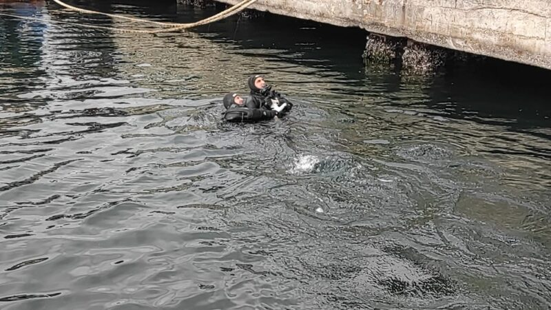 Bursa'da denizde mahsur kalan kediye nefes kesen operasyon