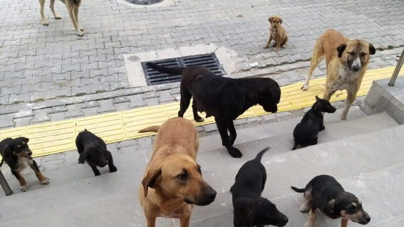 Orhaneli'de sahipsiz köpekler toplandı