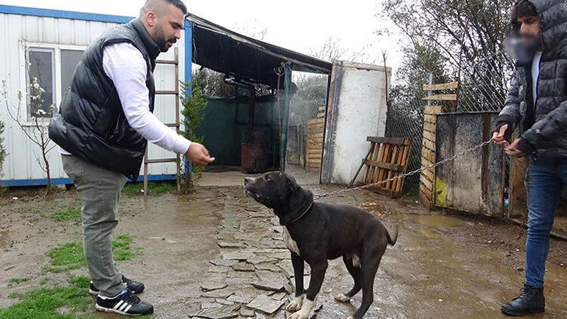 Bursa'da ormandaki dehşet dakikalarını anlattılar: 'Karlos'tan kurtulmak için…'