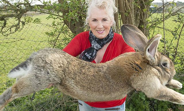 Dünyanın en büyük tavşanı kaçırıldı! Bulana 11 bin TL'lik ödül