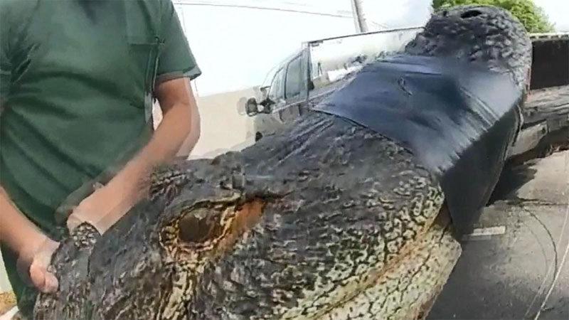 Apartman otoparkında 3 metrelik timsah yakalandı