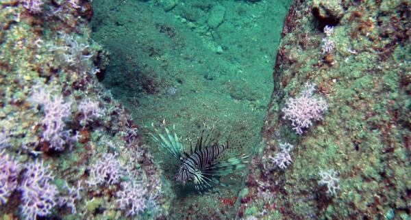 Denizlerde yeni tehlike! Zehirli ve hızla çoğalıyor