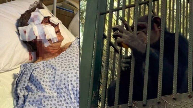 Korkunç olay! Kafesinden kaçıp…