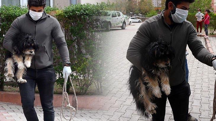 Köpeğin sürekli havlamasından şüphelendiler! Korkunç olay ortaya çıktı