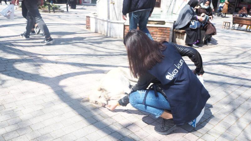 EKA Kurs sokak hayvanlarını unutmadı