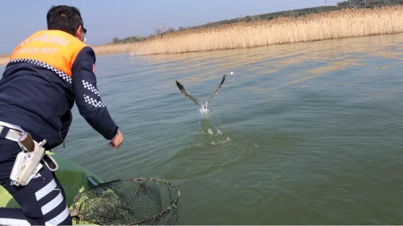 Uluabat Gölü'ne atılan ağa takılan martıyı jandarma kurtardı