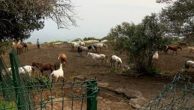 Kayıp atlara ilişkin yeni iddia