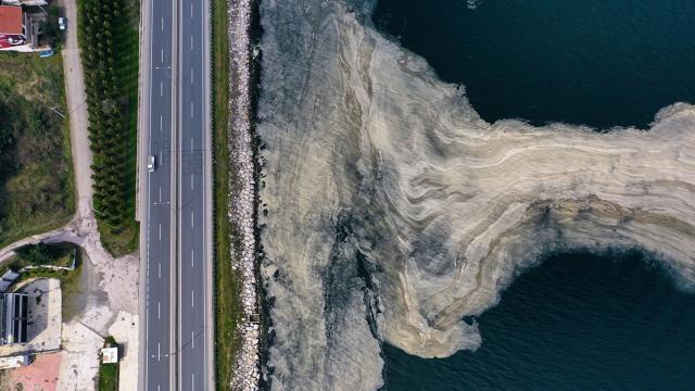 Deniz yüzeyinde beyaz tabaka oluştu