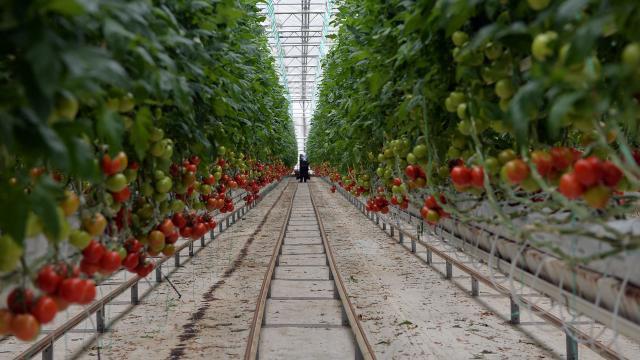 Tarım ve Orman Bakanlığı'ndan yatırım çağrısı