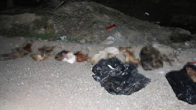 Bunun adı vahşet! Çöp poşetlerinde çok sayıda ölü köpek bulundu