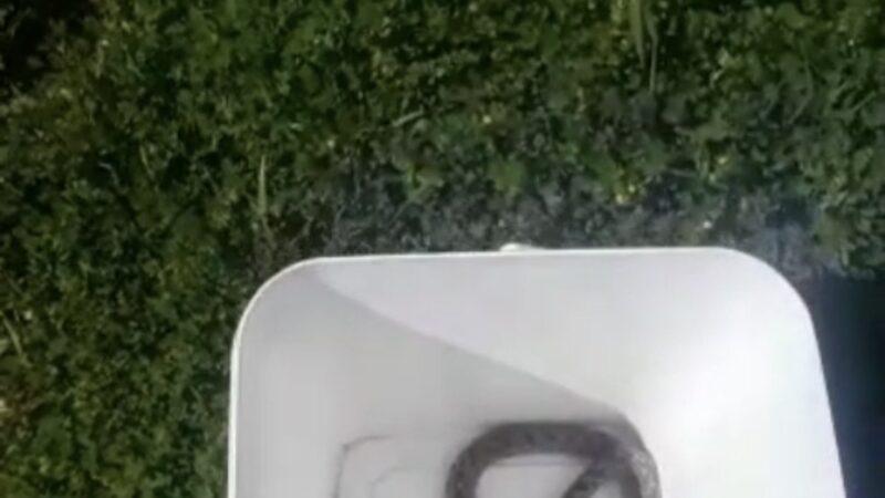 Bursa'da otomobil içindeki yılan doğaya bırakıldı