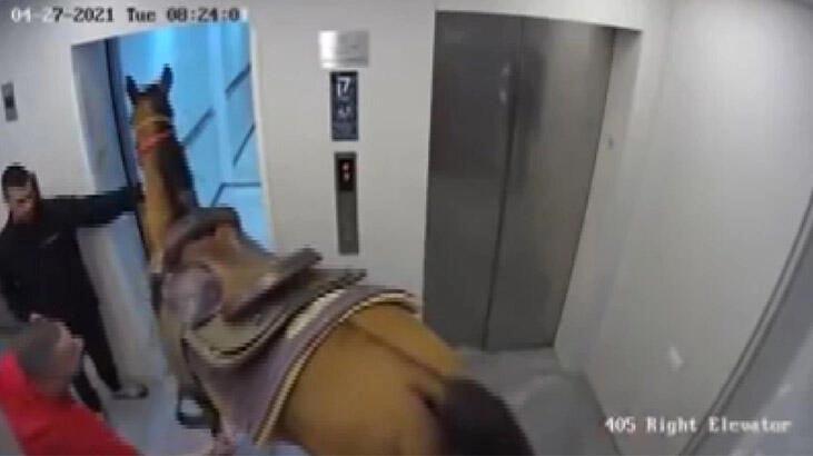 Bir garip olay… Asansöre at sokmaya çalıştılar!