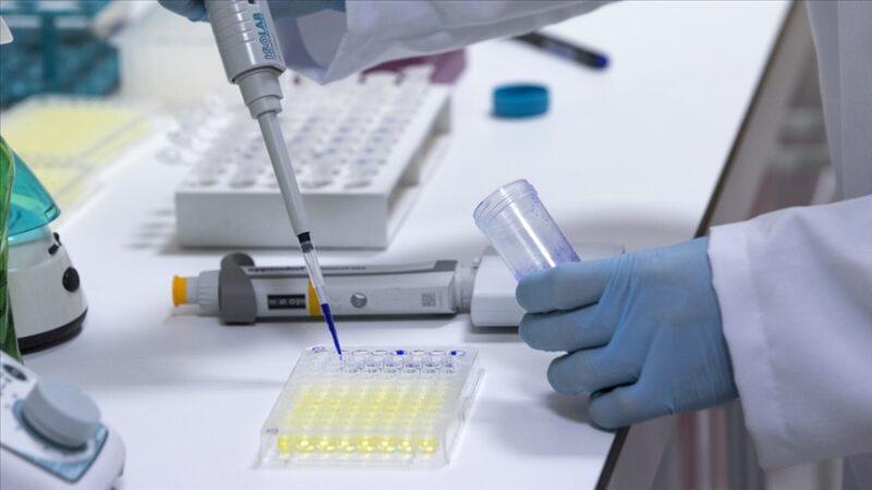 Yerli aşının mutasyona karşı etkisi kanıtlandı
