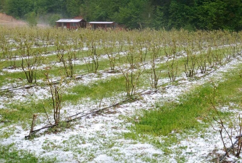 Bursa'da tarım arazilerini dolu vurdu