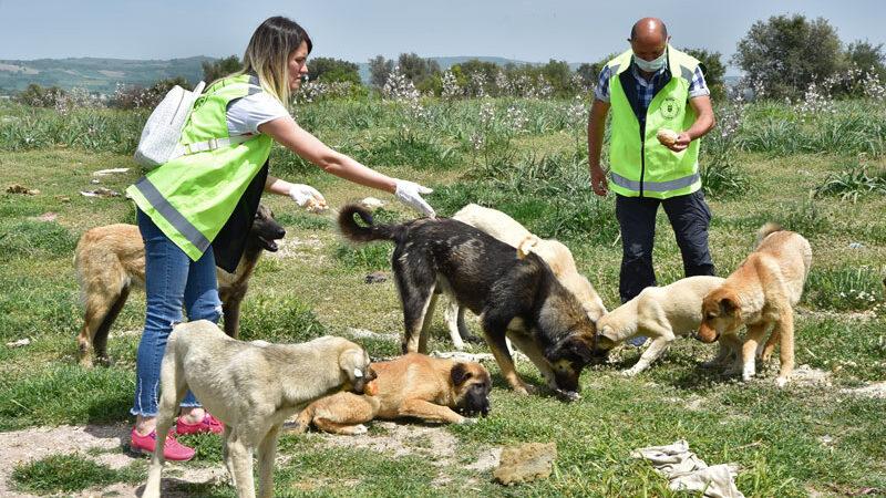 Bursa'da gönüllüler can dostlar için yasağı deldi