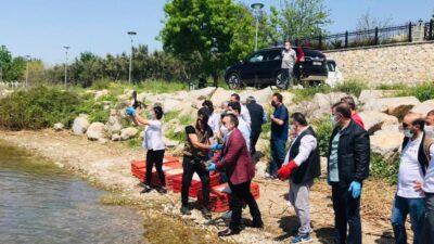 Bursa'da tedavileri tamamlanan hayvanlar doğaya salındı