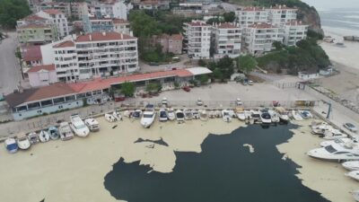 Bursa'da tedirgin eden olay! Balıklardan sonra şimdi de…