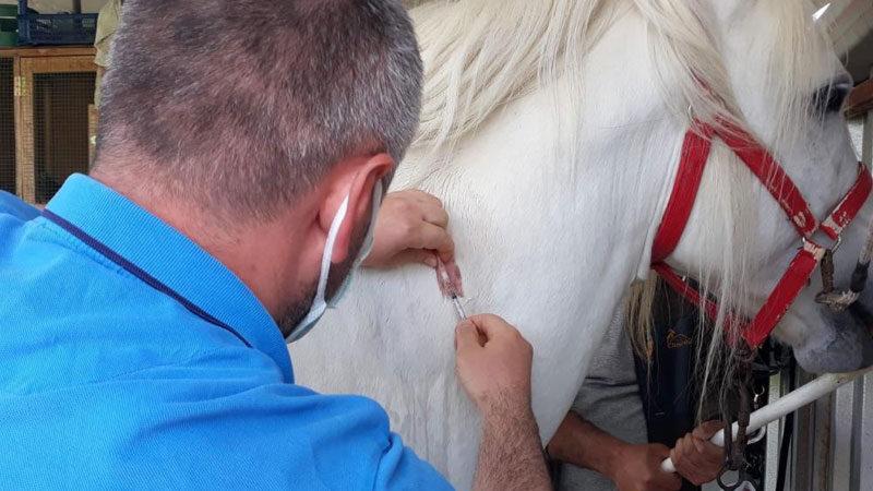Bursa'da rahvan yarış atlarına çip takıldı