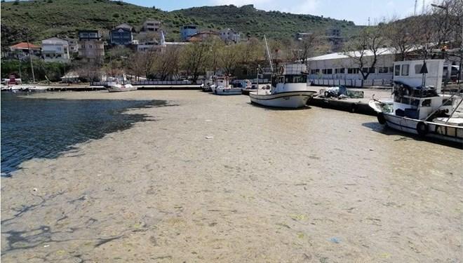 Bilim insanları, Marmara için harekete geçti