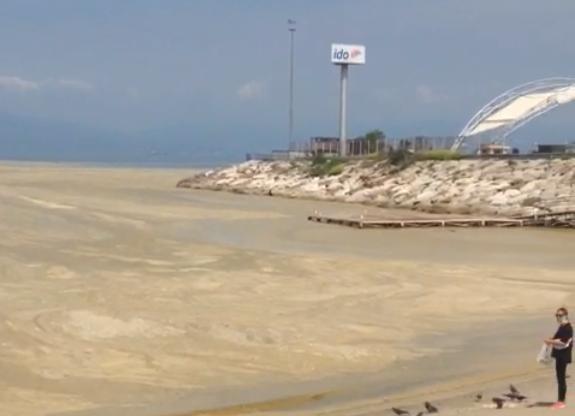 Mudanya'da büyük panik! Denize ne olmuş böyle?