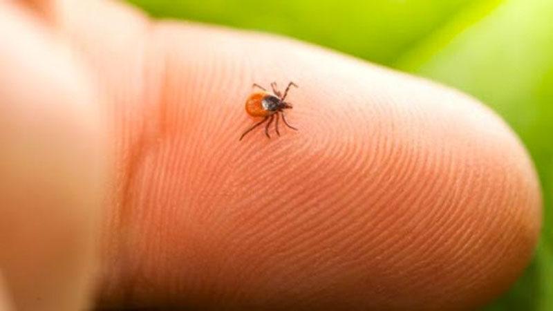 Koronavirüs ile benzer bulgular gösteriyor! Uzmanlar uyardı, dikkat edin…