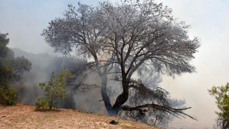Antalya'da korkutan yangın: Kum taşıdılar