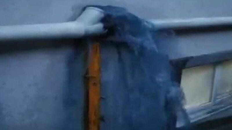 Mavi su bu kez işyerlerine aktı! Sokak köpekleri içip ölüyor