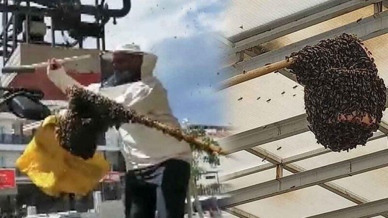 Hastanede panik! Acil servisi arılar bastı