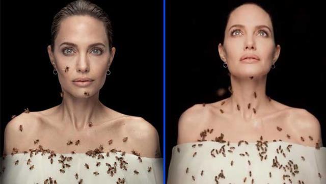 Angelina tek bir amaç için, önlem almadan dakikalarca arılarla poz verdi