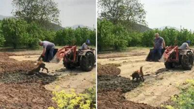 Yer: Bursa… Saatlerce bataklıkta kurtarılmayı bekledi