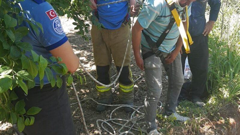 Bursa'da kuyuya düşen çakalı ekipler kurtardı