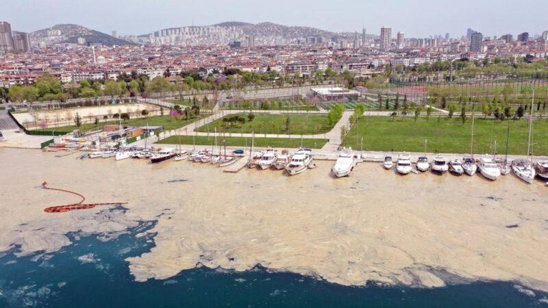 Deniz salyası ABD basınında: 'Marmara ölüyor'