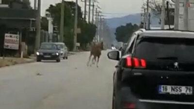 Bursa'da başıboş at, trafiği altüst etti