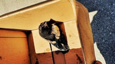 Bursa'da itfaiye ekipleri, yuvasından düşen yavru kuş için seferber oldu